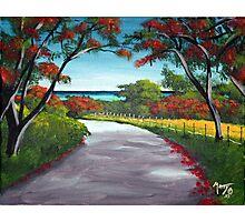 Flamboyant Road Rincon, Puerto Rico Photographic Print