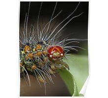 Caterpillar close-up Poster