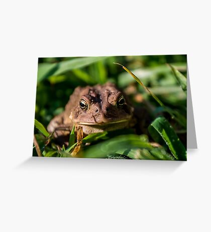 Toad In The Grass Greeting Card