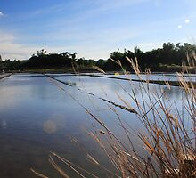 Waterscape Telbang by tguerrero