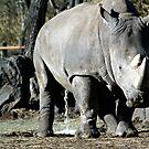 Pissing Rhinocerous by mjds