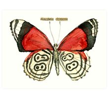 Diaethria Clymena (88 Butterfly) Art Print