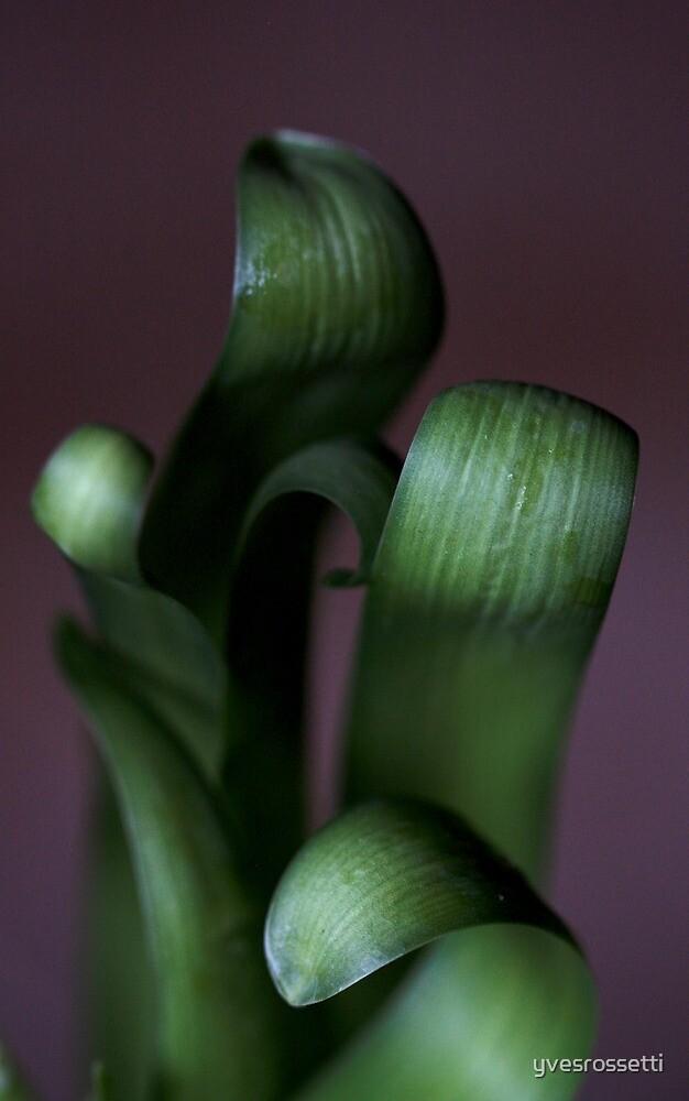 green hyacinth awakening by yvesrossetti