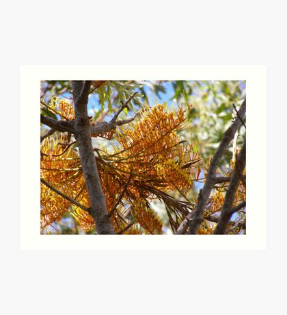 'LOT'S OF MARCHING SOLDIERS!' Grevillea Robusta. Art Print