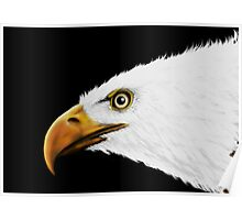 Bald Eagle - Digital Painting Poster