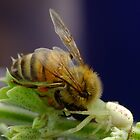 Yum, Yum, Honey Bee! by Gabrielle  Lees