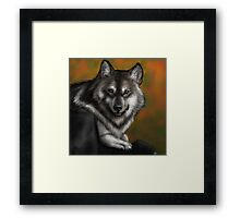 Timber Wolf - Autumnal  Framed Print