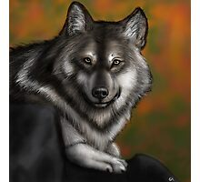 Timber Wolf - Autumnal  Photographic Print