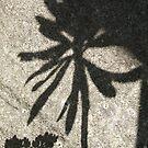 Summer Shadows... by greenstone