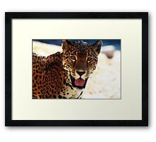 """""""Pat The Cat"""" - Jaguar at the Milwaukee County Zoo Framed Print"""