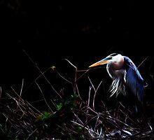Great Blue Heron by D R Moore