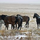 Range horses in snow storm. by Donna Ridgway