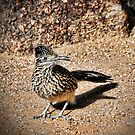 The Roadrunner  by Saija  Lehtonen