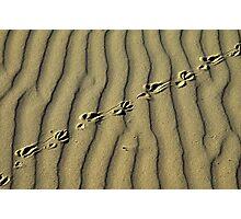 Lone Trekker Photographic Print