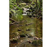 Mossman Gorge Photographic Print