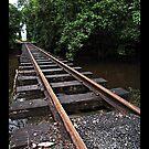 Eubenangee Rail by Giovanna Devlin
