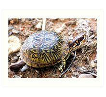 North American Box Turtle #2 Art Print