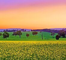 Canola Farm At Dawn by EOS20
