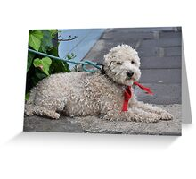 Schnoodle Kaboodle Greeting Card