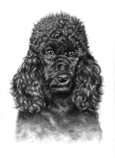 Poodle Portrait by Nicole Zeug