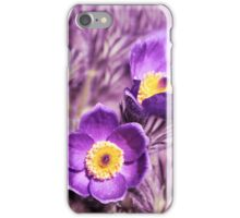 Close up of Pasque Flowers  iPhone Case/Skin