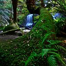 Snaking Tree Fern by Stephen Ruane