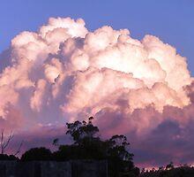 Over the Back Fence 2, Lilydale, Tasmania by RainbowWomanTas