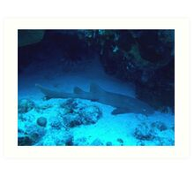 Nurse Shark Art Print