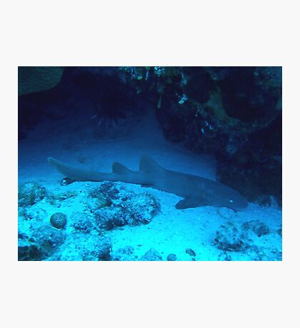 Nurse Shark Photographic Print