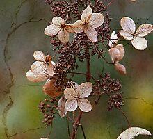 Hydrangea by RosiLorz