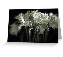 Daffodil Duotone    Greeting Card