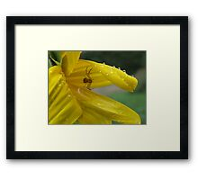 So Much Beauy In One Small Space! Framed Print