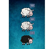 Bored Sheep Photographic Print