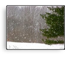 A Flake of Snow Canvas Print