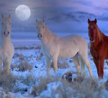 Moonlight Magic  by Jeanne  Nations
