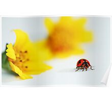 Ladybird on clean and clear background Poster