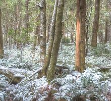 ICE - Kanangra Boyd National Park,Oberon NSW- The HDR Experience by Philip Johnson