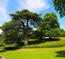 In the Park, Saltram by ColinBoylett