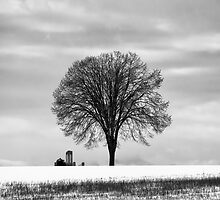 A tree and a farm by Thibault ROLAND