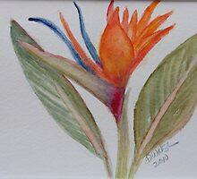 Bird of Paradise by donnawalsh
