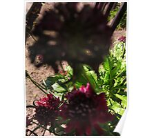 Little flower BIG SHADOWS Poster