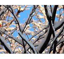 tree with snow Photographic Print