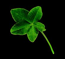 Luckier than Lucky -+ 5 Leaf Clover! by Marcia Rubin