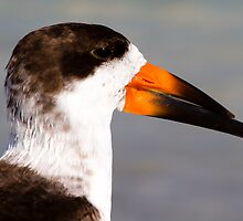 Portrait of a Skimmer by noffi