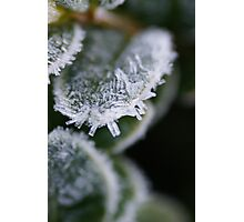 Cold Snap Photographic Print