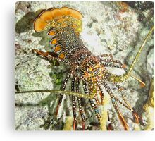 Caribbean Spotted Lobster Metal Print