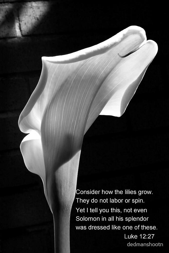 lily luke 12:27 by dedmanshootn