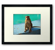 Monkey at pool  Framed Print