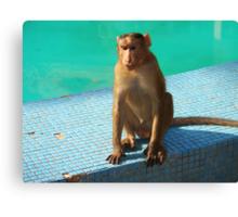 Monkey at pool  Canvas Print