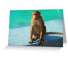 Monkey at pool  Greeting Card